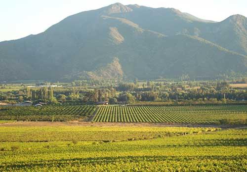 tremonte vineyards